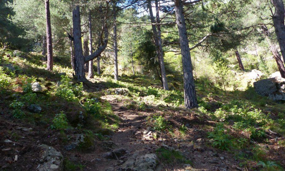 la randonnée de l' Arcu di Scandulaghju à Corte | Corse VTC